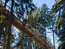 Bavorský les. Stezka v korunách stromů vede mnoho metrů nad lesní cestou. V mnoha místech je podepřena velmi důkladnými sloupy.