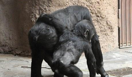 Tatu si hraje s Kiburi