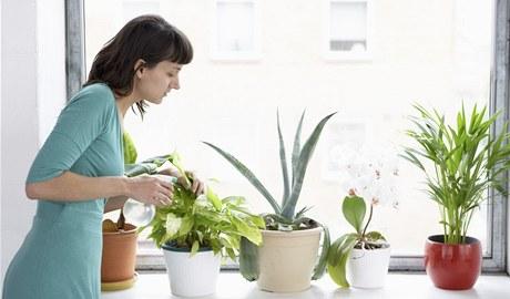 Rostlinám v zimě omezte zálivku, víc ocení rosení