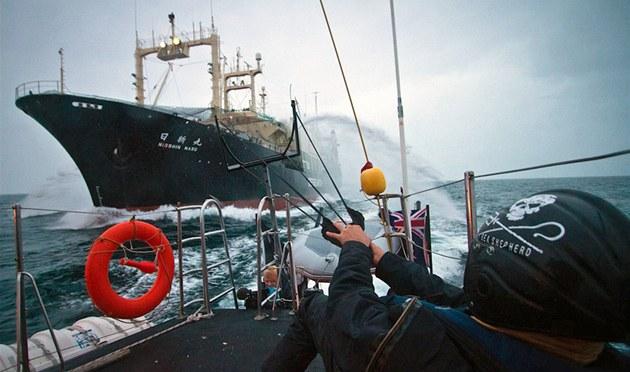 Aktivisté ze Sea Sheperd Conservation Society blokují japonskou velrybá�skou lo� (9. února 2011)