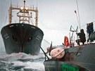 Aktivisté ze Sea Sheperd Conservation Society blokují japonskou velrybářskou loď (9. února 2011)