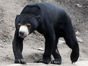 Medvědi v jihlavské zoo nespí, na zimu nejsou zvyklí.