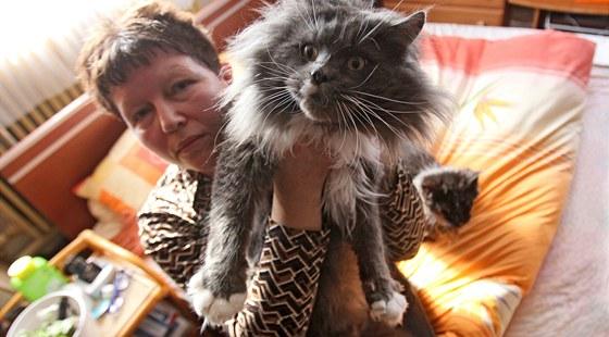 Jarmila Šejnohová z Bohuňova má více než dvacet koček plemena Mainská mývalí, kterým v Americe říkají kočkopsi
