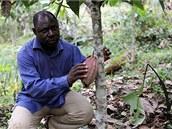 Manfred Epanda Aimé na kakaovníkové plantáži poblíž Malénu V, která vznikla pod jeho vedením.