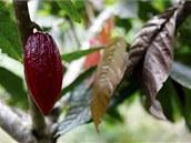 Pěstování kakaovníku je pro místní obyvatele novým zdrojem příjmu. Mimo jiné  omezuje lov divokých zvířat.