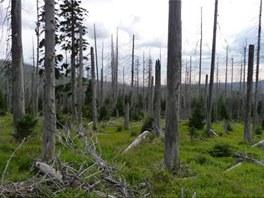 Snímek přirozené obnovy lesa v okolí Roklanské hájenky, který je podle odborníků důkazem, že les se z kůrovcové kalamity dokáže vzpamatovat sám i bez rozsáhlého kácení