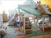Něvská maškaráda je ideální rodinný mazlíček, který výborně vychází s dětmi