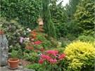 V zahradě před domem orientované k jihu by se rododendronům nedařilo. Zato ve dvoře, navrch ve stínu dorůstající zeleně, prosperují náramně.