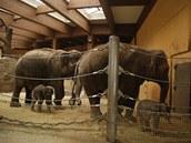 Slonice s ml��aty v jednom v�b�hu.