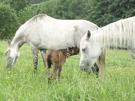 U Petra Hájka mají koně k dispozici rozsáhlé pastviny.