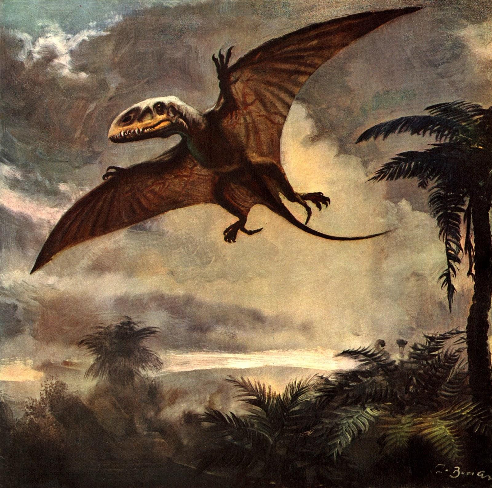 OB3a9c67_dimorphodon_by_zdenek_burian_1960.JPG