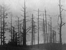 Poničené lesy po přechodu fronty přes Ostrou hůrku u Háje ve Slezsku.