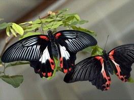 Motýli z Motýlího domu u Františkových Lázní