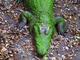 Krokodýli se běžně dožívají nějakých sedmdesáti let, v zajetí i přes 100 let.