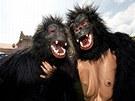 Maskovan� krasavci z prvn�ho ro�n�ku B�hu pro gorily