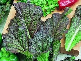 """Listová hořčice, odrůda RED GIANT, s výrazným červeným zabarvením žeber. Křehká zelenina do salátů, výborná ve """"špenátové"""" úpravě"""