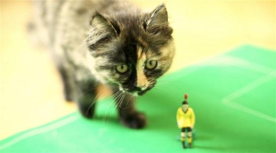 Koťata i dospělé kočky hry zbožňují, navíc si při nich stejně jako člověk trénují mozek.