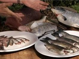 Co se grilování ryb týká, máte celou řadu možností.