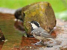 Ptáci zahradní pítko ocení, jen ho musíte umístit ve volném prostoru, aby je neohrožovali predátoři.