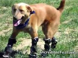 Naki´o je prvním psem na světě s bionickými nohami.