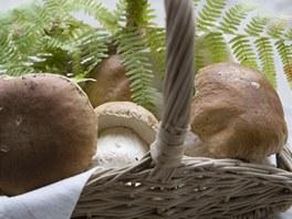 Čerstvé houby jsou v kuchyni nejlepší.