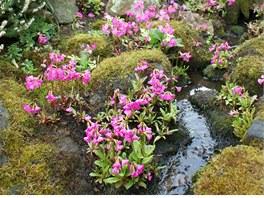 Alpínum svažující se od domu k potoku v údolí nabízí téměř zázračné podmínky