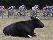 B��. Cyklistick� peloton v pr�b�hu 7. etapy Tour de France.