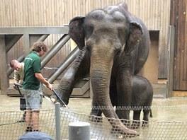 Ostravská slonice Johti se svou dcerkou Rashmi při očistné koupeli.