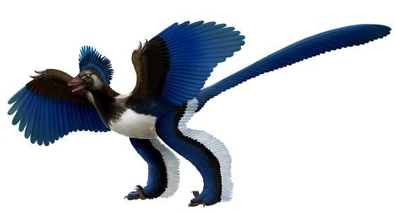 Rekonstrukce domn�l� podoby druhu Xiaotingia zhengi. �ili p��buzn�ho, kter� Archeopteryxe z�ejm� p�iprav� o jeho titul prvn�ho z�stupce pt�k�. Jde o ope�en�ho teropodn�ho dinosaura z �eledi Archaeopterygidae, kter� �il v obdob� ran� pozdn� jury (asi p�ed 160 miliony let) na �zem� dne�n� ��ny (souvrstv� Tiaojishan, z�padn� Liao-ning).