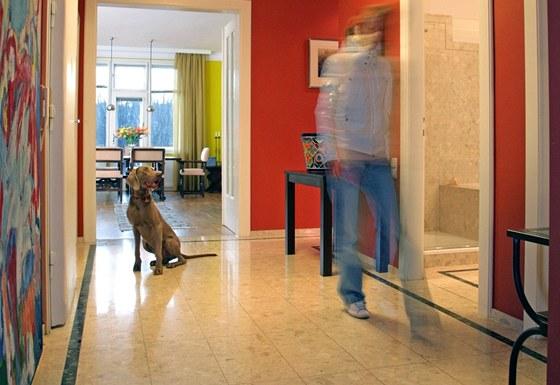 Zoe, dvouletá psí slečna z rodu amerických staffordshirských teriérů, je