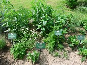 Rostliny v tematických záhonech jsou označeny informačními tabulkami ve třech