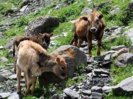Na horské stezce nad Kazbegi
