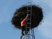 Kontrola čapích hnízd na Roudnicku