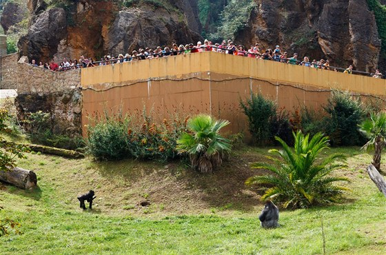 Gorilí výběh v přírodním parku Cabárceno na severu Španělska, kam Moja