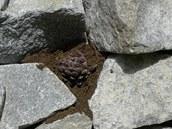 Rostliny s�zejte do vlhk�ho substr�tu do hloubky t�� a� p�ti centimetr�.