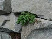 Vysazen� rostliny z�dku rozhodn� o�iv� a �asem ji p�kn� porostou.
