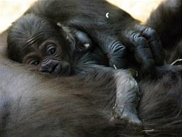 Moja v náručí mámy
