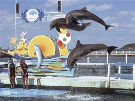 Vyrazit si na Kubě na koupání s delfíny je oblíbená zábava nejen českých