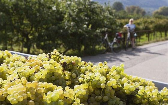 Cyklistická stezka mezi vinicemi