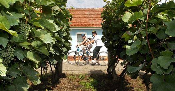 Cyklistická stezka Modré hory vede i kolem vinic u Bořetic
