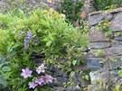 Obvodové zdi porůstají kvetoucí i plodící popínavci. Zde vistárie a plamének