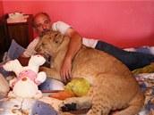 Miroslav Gajdorus a jeho devítiměsíční lev berberský