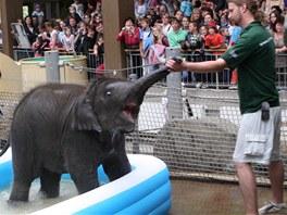 V ostravské zoo pokřtili sloní samičku Rashmi.