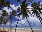 Palmová pláž v Brazílii