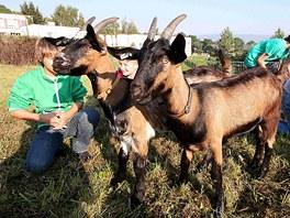 U koz je neustále živo.