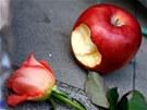 Nakousnuté jablko, připomínající slavné logo Applu leží spolu s květinami před