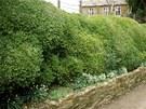 Zimostráz neboli buxus si už našel místo v mnoha zahradách. Můžete mu dodat