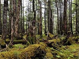 Deštný prales nedaleko Cordovy