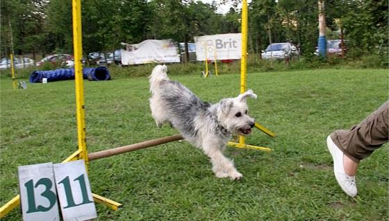 Psi v Praze mají i spoustu příležitostí ke sportování.