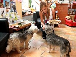 Domácí psí masové sušenky oceňují psi i jejich páníčci.